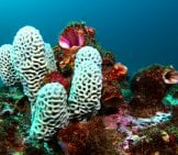 Honeycomb Sea Sponge Photo By: John Turnbull Https://creativecommons.org/licenses/by-Nd/2.0/