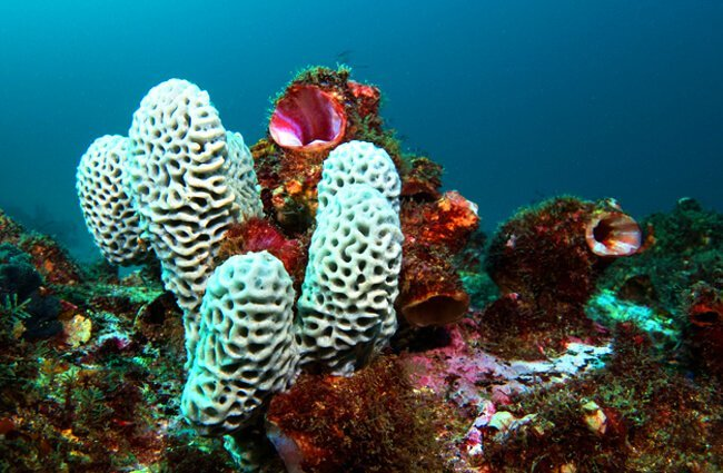Sea Sponge - Description, Habitat, Image, Diet, and Interesting Facts