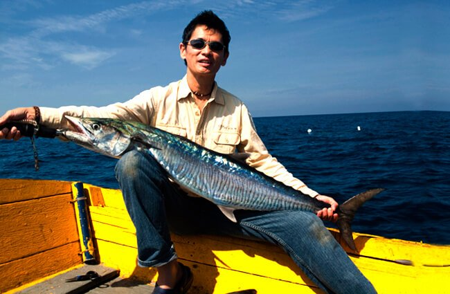 Spanish Mackerel catch, at Paka, Terengganu Photo by: Kevin Poh https://creativecommons.org/licenses/by/2.0/
