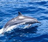 Dolphinphoto By: Mark Leehttps://creativecommons.org/licenses/by-Nd/2.0/