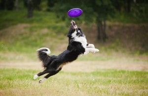 best dog frisbee by: fotosearch.com