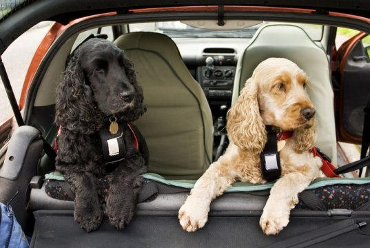 dog car seat cover by: fotosearch.com