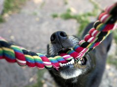 interactive dog toy tug rope by: fotosearch.com