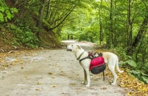 dog backpack by:fotosearch.com