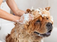 dog shampoo by: Fotosearch.com