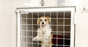 dog gate by: fotosearch.com