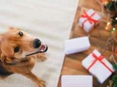 dog gift by: fotosearch.com