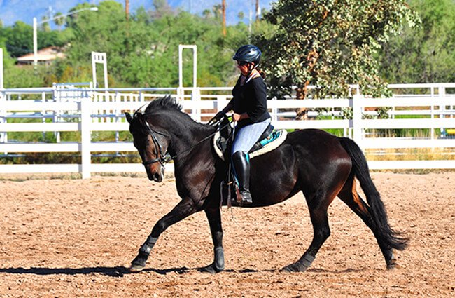 A beautiful Friesian in the training corral Photo by: Dianne White https://creativecommons.org/licenses/by-nd/2.0/