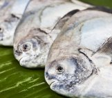 Black Pomfret Fish Laid Out On A Banana Leaf Photo By: (C) Singhanart Www.fotosearch.com