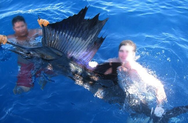 Sailfish Photo by: Anonymous Unknown author CC BY-SA https://creativecommons.org/licenses/by-sa/3.0