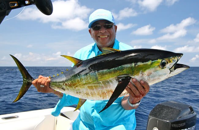 Fisherman showing off his Yellowfin catch Photo by: scottgardner from Pixabay https://pixabay.com/photos/fishing-ocean-ocean-fishing-1469753/