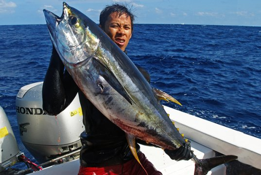 Recreational angler showing off his Yellowfin Tuna catchPhoto by: sucinimadhttps://creativecommons.org/licenses/by-nd/2.0/