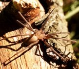 Brown Recluse Was Trapped Photo By: Lisa Brownhttps://creativecommons.org/licenses/by/2.0/