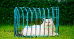outdoor cat house by: fotosearch.com