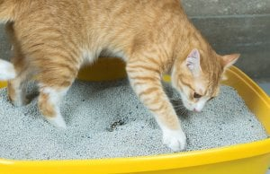 cat litter box by: Fotosearch.com