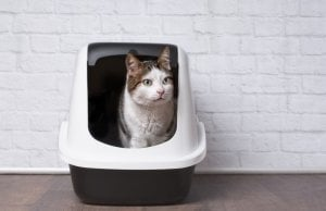 self cleaning litter box by: Fotosearch.com