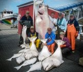 Halibut Caught By Sport Fishermen Photo By: Andrea Pokrzywinski Https://creativecommons.org/licenses/by/2.0/