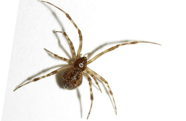 House Spider closeup Photo by: Fyn Kynd https://creativecommons.org/licenses/by/2.0/
