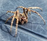 A House Spider On The Patio Photo By: (C) Tas3 Www.fotosearch.com