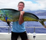 A Male Dorado (Mahi Mahi)Photo By: Philhttps://creativecommons.org/licenses/by-Sa/2.0/