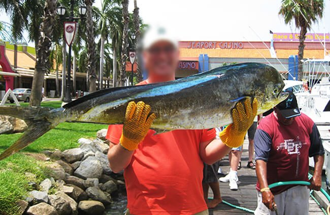 Sport fisherman showing off his beautiful Mahi Mahi catch Photo by: Ben W https://creativecommons.org/licenses/by-sa/2.0/