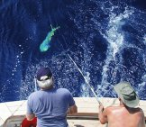 A Pair Of Sport Fishermen Reel In A Nice Mahi Mahi Photo By: Kim Https://creativecommons.org/licenses/by-Sa/2.0/