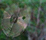 Orb Weaver Web Photo By: Graham Winterflood Https://creativecommons.org/licenses/by/2.0/
