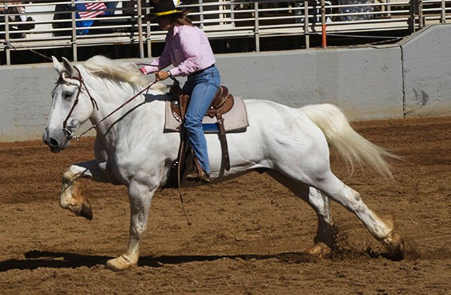 Woman riding a dapple-grey Percheron Photo by: Jean https://creativecommons.org/licenses/by/2.0/