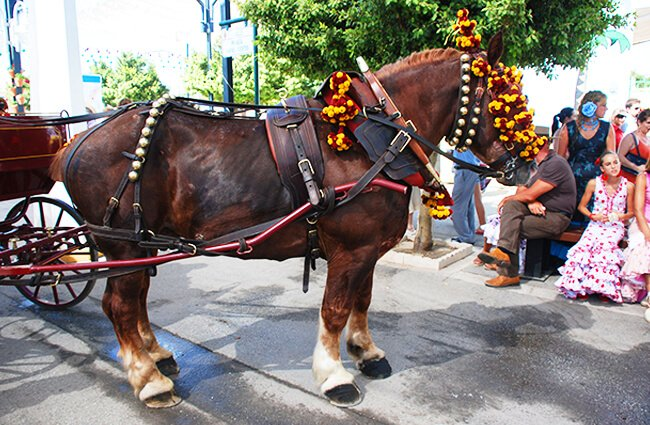 A beautiful Percheron dressed out for the parade Photo by: Antonio https://creativecommons.org/licenses/by/2.0/