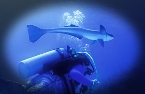 Scuba diver approaching a large RemoraPhoto by: Craig Hatfieldhttps://creativecommons.org/licenses/by/2.0/