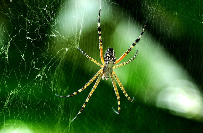 Spider in its web Photo by: Kamaljith K V https://creativecommons.org/licenses/by/2.0/