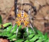 Stunning Spider Photographed On A Hike In Costa Ricaphoto By: Sara Yeomanshttps://creativecommons.org/licenses/by/2.0/