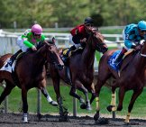 Thoroughbreds Fighting For Position In A Race Photo By: Paul Kehrer Https://creativecommons.org/licenses/by/2.0/